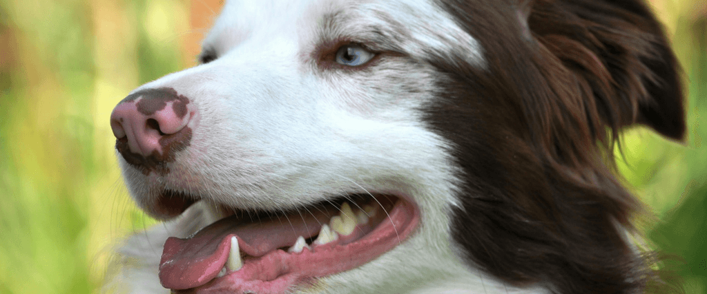 The Secret To Great Dog Dental Care