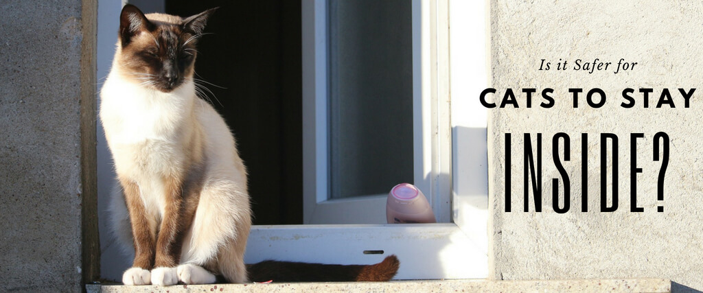 is it safer for cats to stay inside